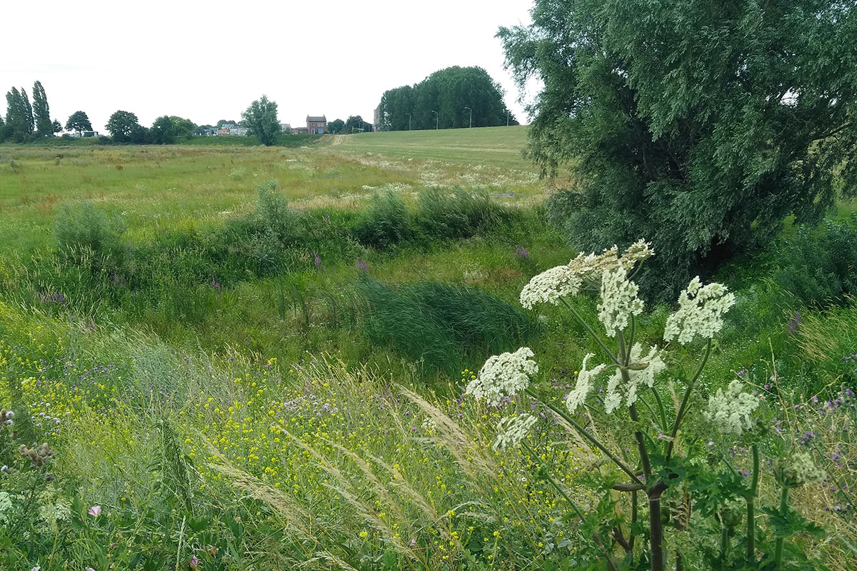 Op Plantenexcursie In De Kleine Willemswaard